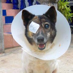 Bur-Eye-surgery