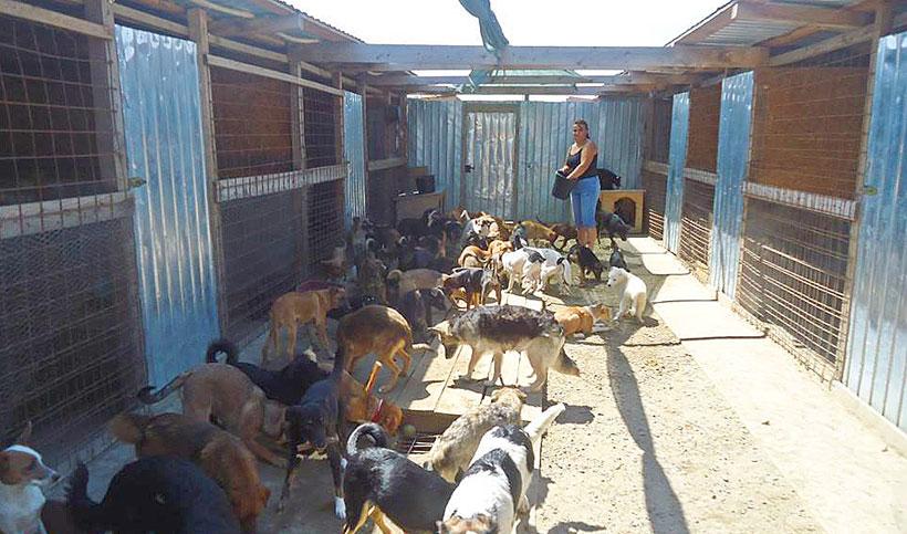Feeding time Sava's Safe haven…