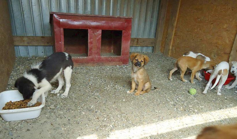 Hungry puppies Romania…