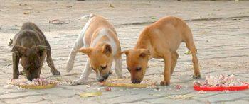 pups-1