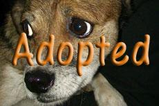Kaya-Adopted
