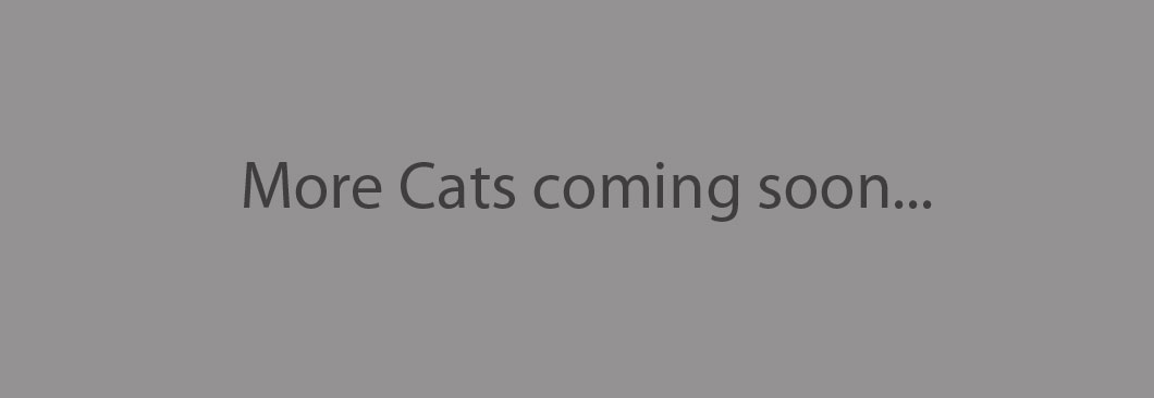 More-cats-soon-1