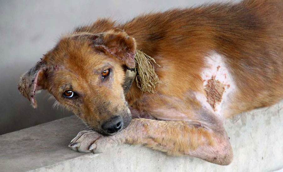 Assist dogs rescued from the Dog Meat Trade