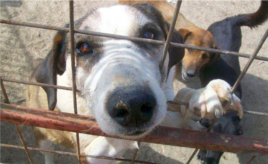 Support impounded street dogs