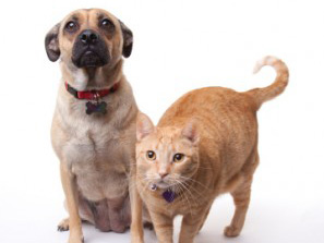rabies-vaccination-dogs-cats-300x273