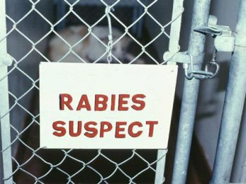 rabies_suspect_sign