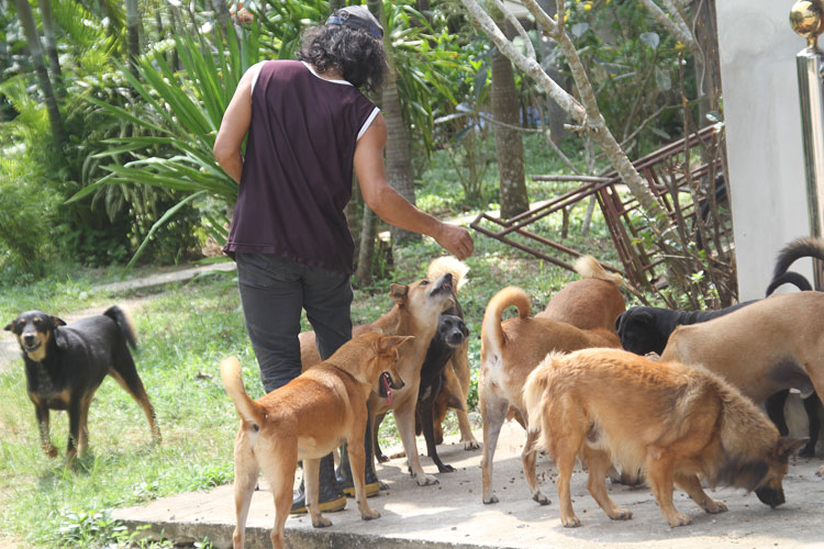 Dinner time for dogs in Bang Sapan Thailand…