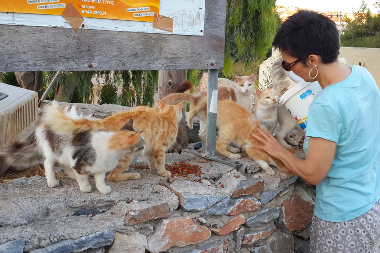 Food for strays on Syros…