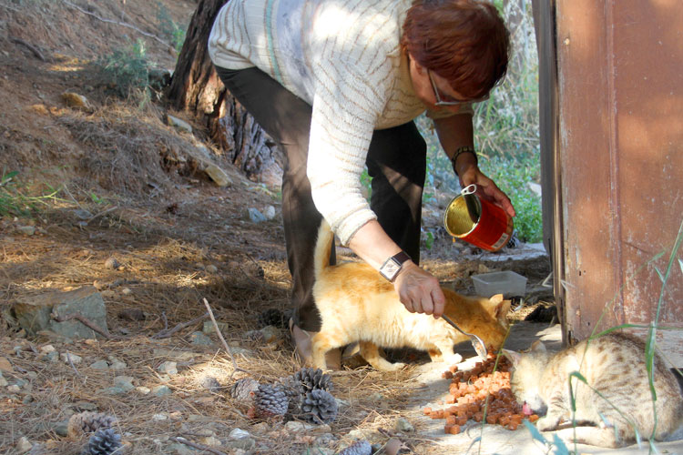 Feeding street cats in Greece…