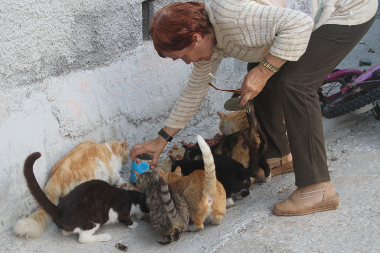 Feeding street cats on Syros Island…